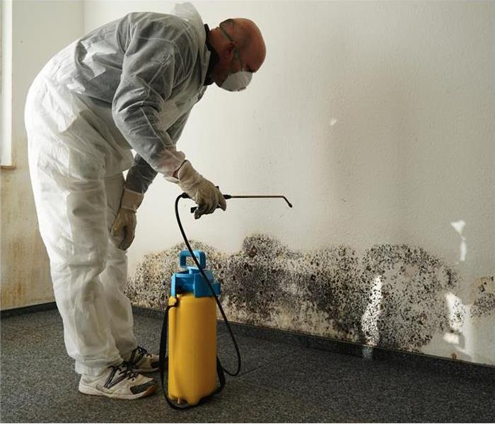 Mold specialist combating black mold on a wall