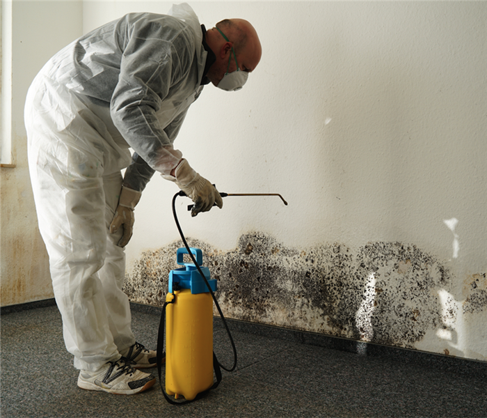 Why SERVPRO What to Know About Mold Odor