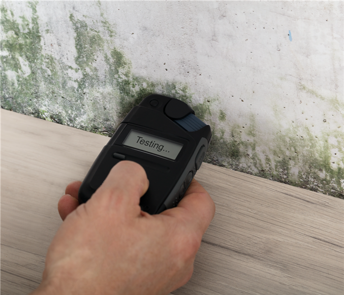 Mold Remediation Assessing Mold Damage: What You Need To Know
